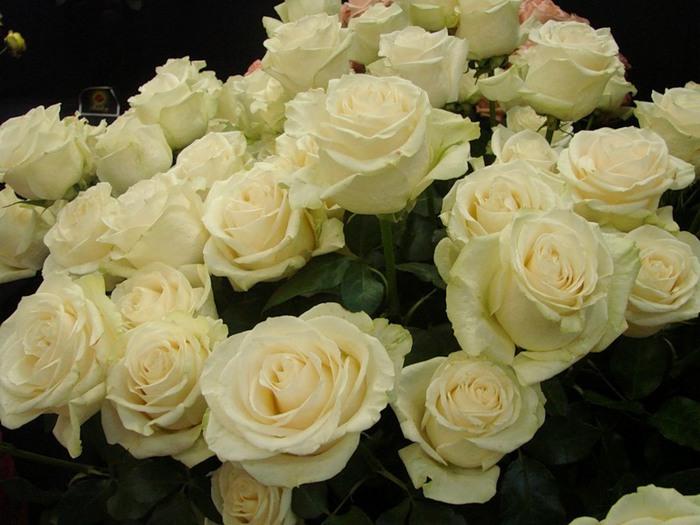Букет из белых роз как сделать букет более 25 роз - Интернет сайт республики Карелия
