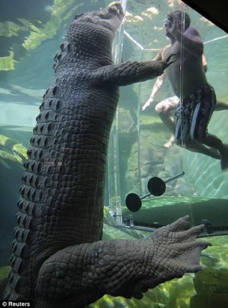 аттракциона бухта крокозавра австралия 1 (450x607, 168Kb)