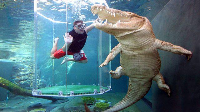 аттракциона бухта крокозавра австралия 4 (640x360, 215Kb)