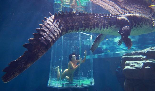 аттракциона бухта крокозавра австралия 6 (650x380, 242Kb)