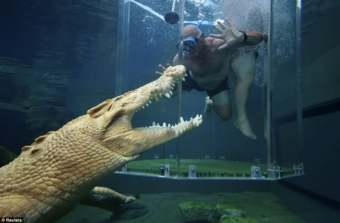 аттракциона бухта крокозавра австралия 9 (700x459, 215Kb)