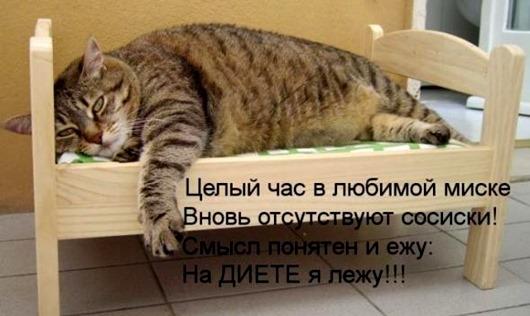 104279081_original__1_.jpg