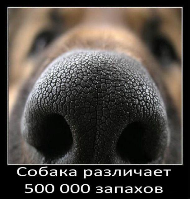 1 (611x640, 119Kb)