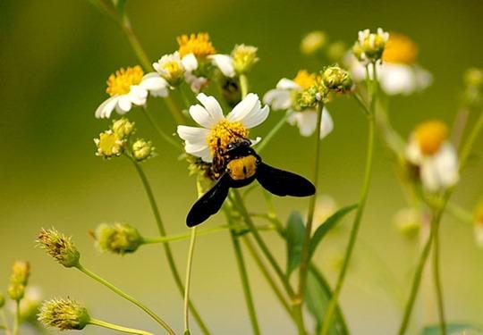 Красивые фотографии пчел