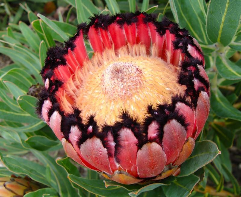 Фото цветы африки
