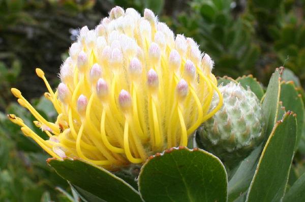 екзотична квітка
