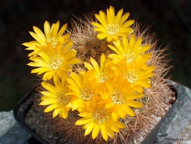 1202109506_cactuses_023 (539x380, 252Kb)