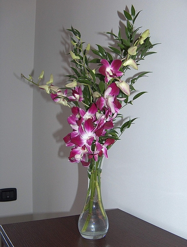 орхидея дендробиум 2 (379x500, 143Kb)