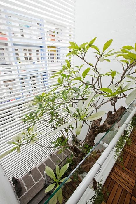 дерево в интерьере квартиры фото 1 (466x700, 302Kb)
