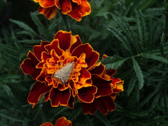 летние цветы 1 (700x525, 432Kb)