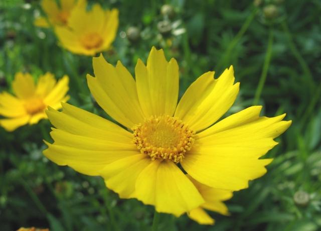 летние цветы 3 (640x460, 273Kb)
