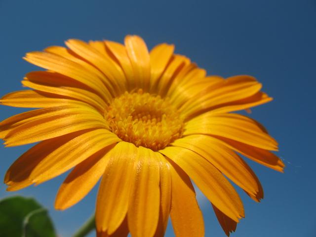 летние цветы 9 (640x480, 339Kb)