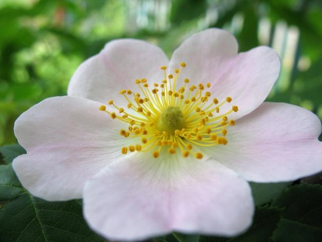 летние цветы 15 (640x480, 287Kb)