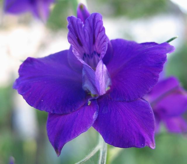 летние цветы 17 (640x564, 330Kb)