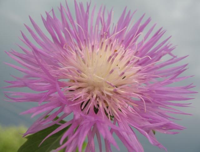 летние цветы 19 (640x489, 304Kb)