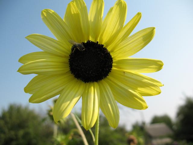 летние цветы 25 (640x480, 319Kb)