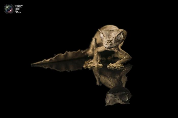 геккон фото 1 (700x465, 53Kb)