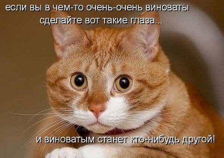 3571750_46_2 (450x318, 30Kb)