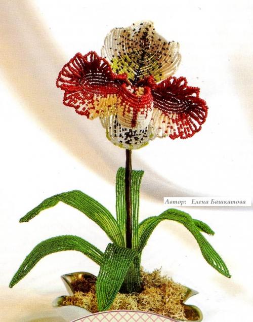 Как сплести цветок Венерин Башмачок из бисера.  Подробное описание работы и подробные наглядные схемы плетения цветка.