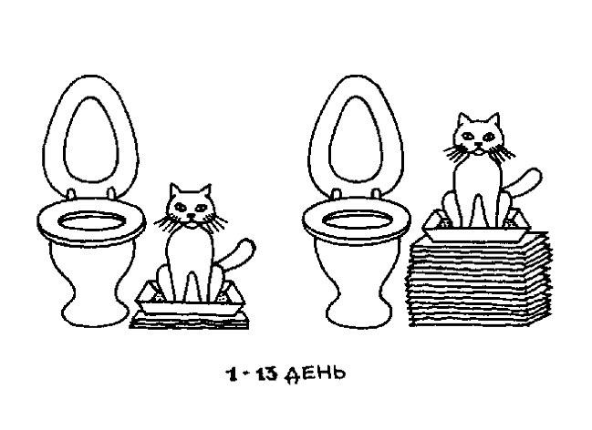 Если всё будет нормально и кот