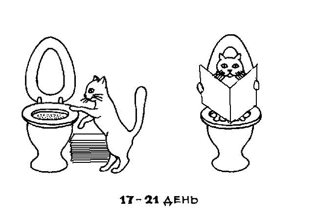 Кот на унитазе картинка