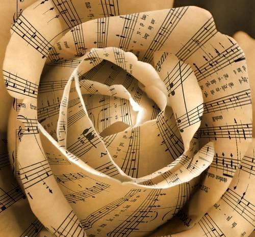 Rosa musica (500x466, 51Kb)