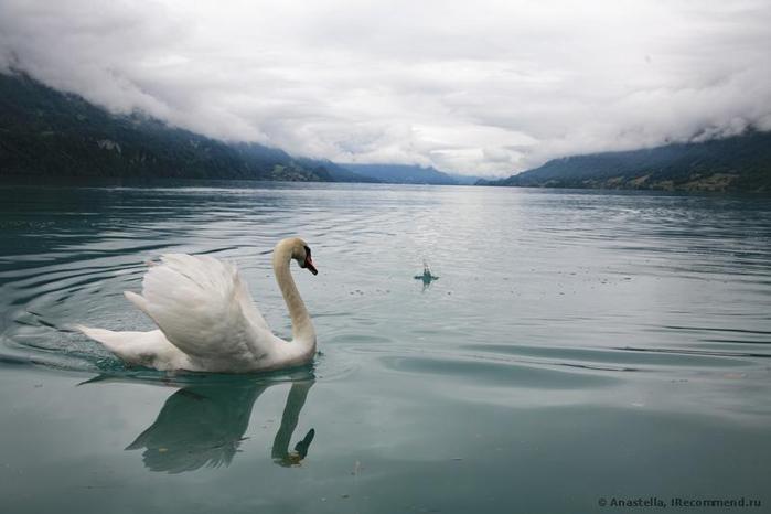 швейцария, озера 7 (700x466, 186Kb)