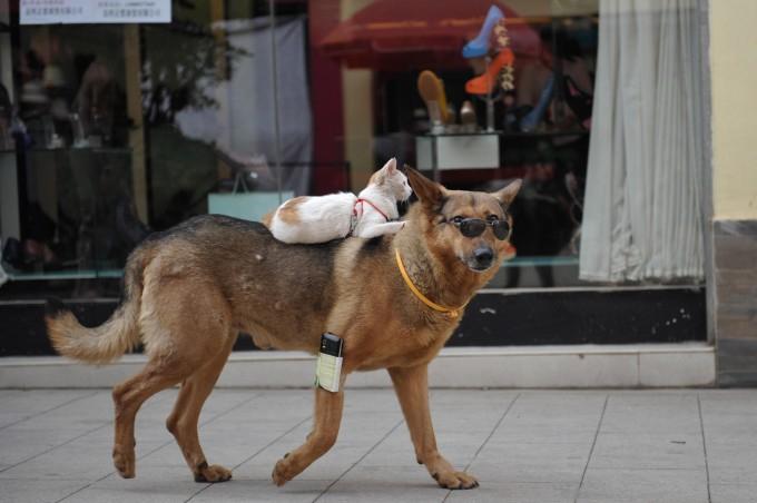смешные животные фото 1 (680x452, 192Kb)