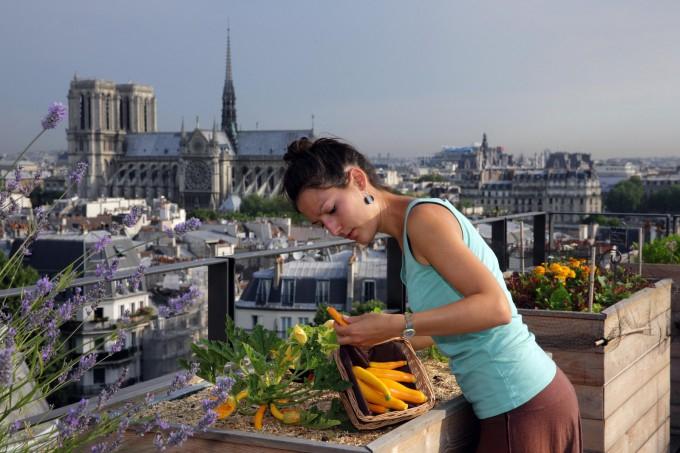 огород на парижской крыше фото (680x453, 271Kb)