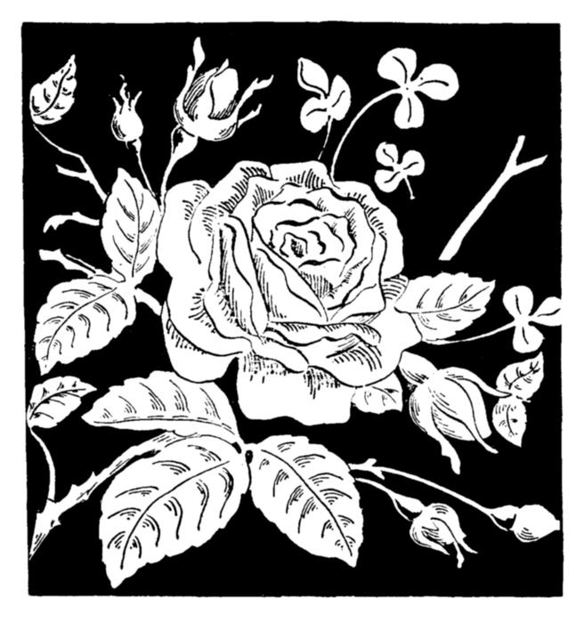 78846524_large_roses018 (656x700, 278Kb)