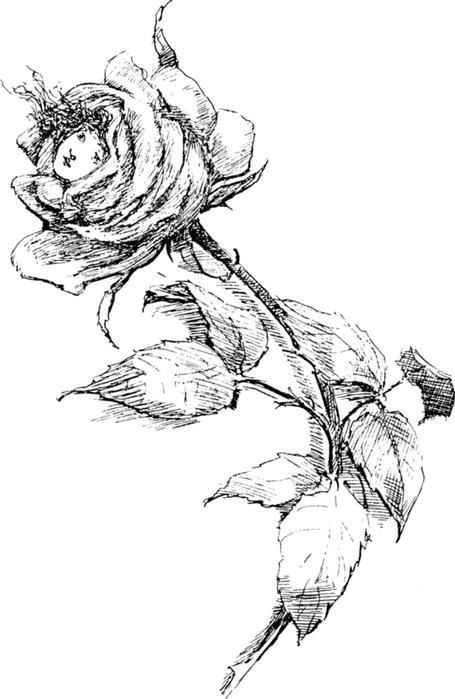 78846546_large_roses030 (455x699, 212Kb)