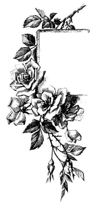 78846566_large_roses037 (334x699, 158Kb)
