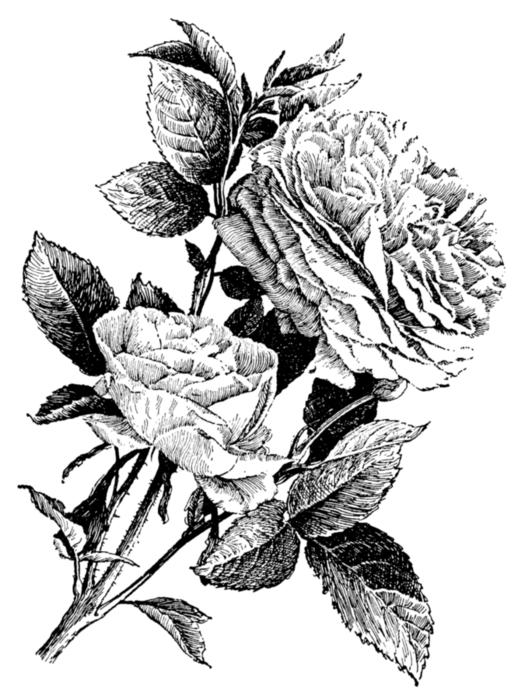 78847088_large_roses083 (525x700, 192Kb)