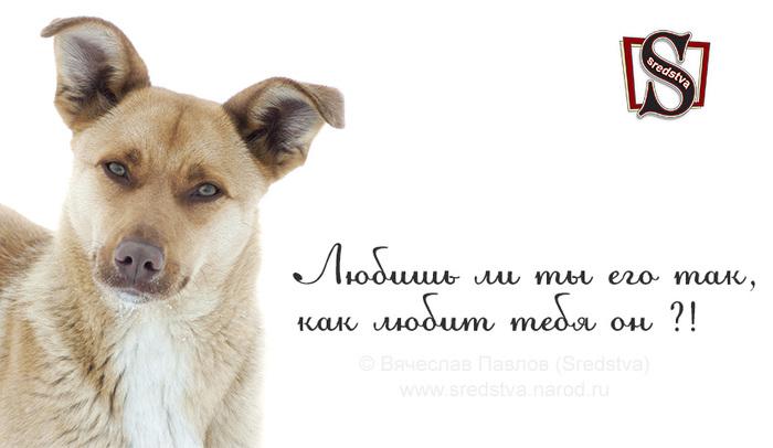 афоризмы о собаках, высказывания о собаках, как любит тебя он, как любит тебя он !?, любишь ли ты его так, любишь ли ты его так как любит тебя он, почему собака друг, собака лучший друг человека, собачьи тексты, тексты о собаках/1377541093_Sredstva_0035 (700x406, 69Kb)