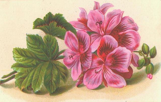 Flowers103 (640x406, 221Kb)