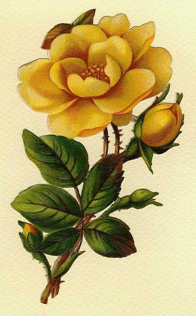 Flowers110 (398x640, 194Kb)