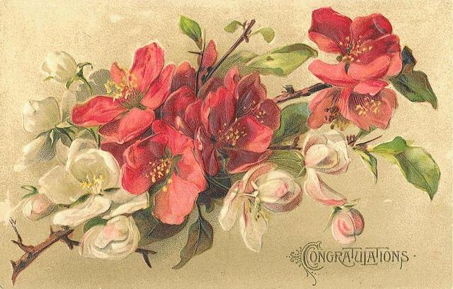 Flowers127 (640x409, 217Kb)