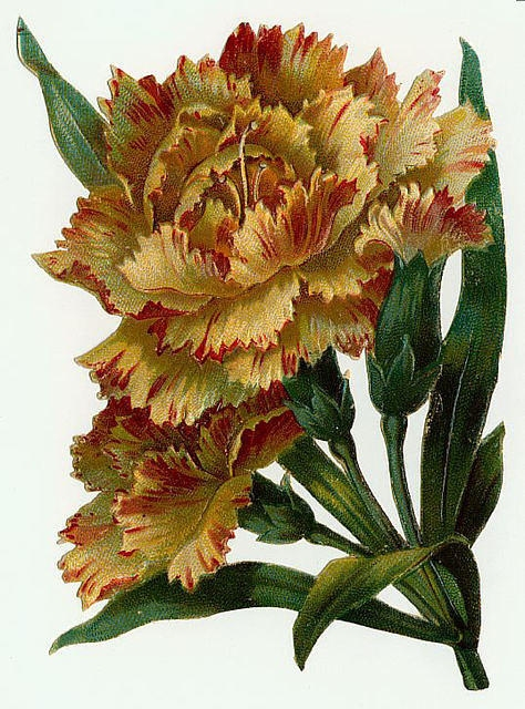 Flowers136 (474x640, 265Kb)