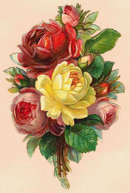 Flowers152 (431x640, 213Kb)