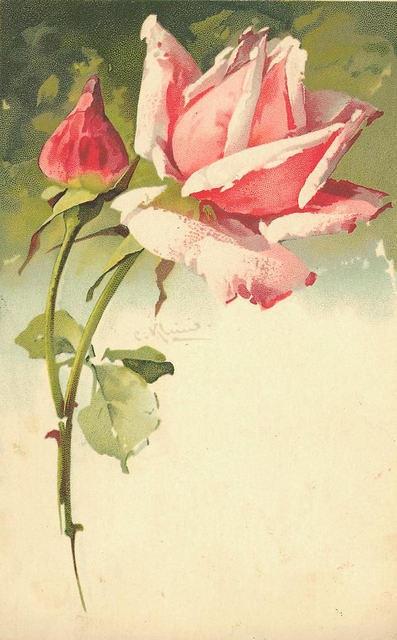 Flowers156 (397x640, 145Kb)