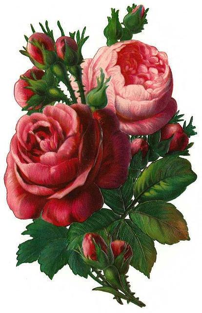 Flowers159 (414x640, 166Kb)