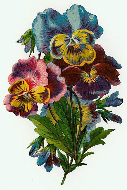 Flowers161 (431x640, 198Kb)