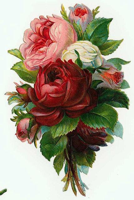 Flowers172 (428x640, 200Kb)