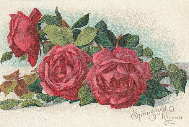 Flowers184 (640x429, 271Kb)