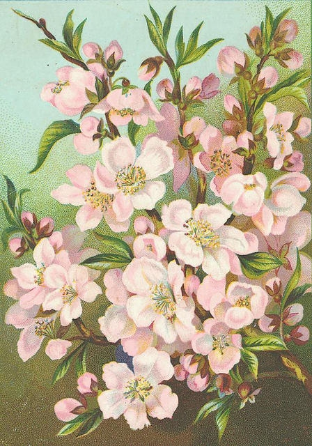 Flowers186 (448x640, 271Kb)
