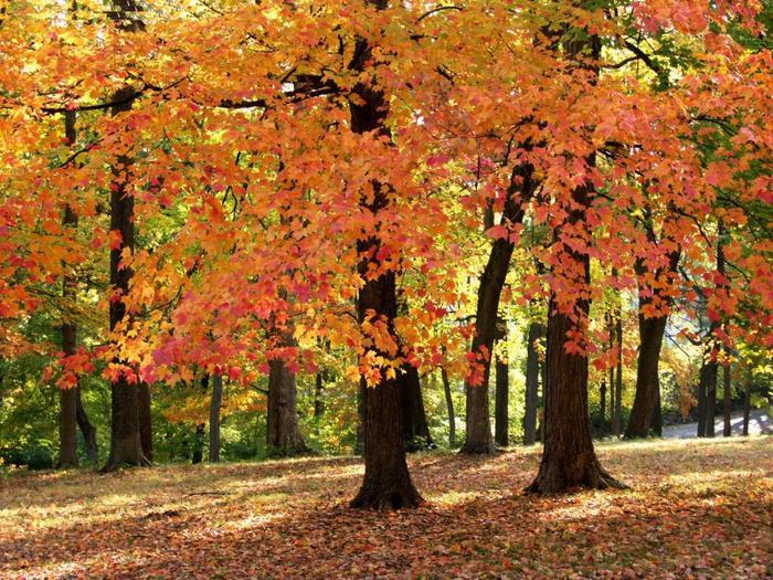 пришла осень 7