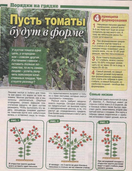 томаты (541x700, 97Kb)