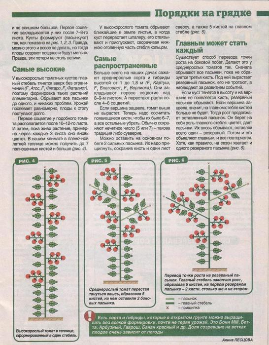 томаты2 (546x700, 96Kb)