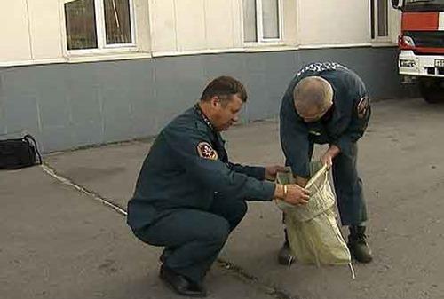 В Москве питон вывалился из окна