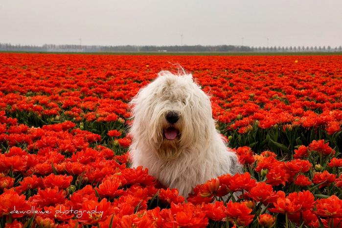 собака1 (700x466, 464Kb)